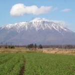 岩手山と麦畑